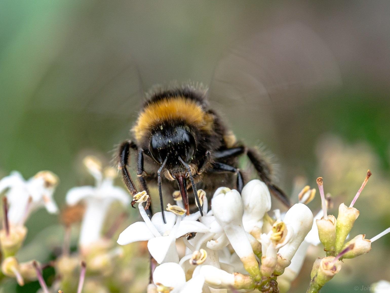 Plant Bee Balm